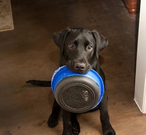 Paleo-Dog-Food